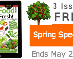 Raw food recipes spring special