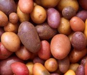 Does the Potato Diet Really Work?