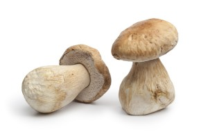 Whole fresh porcini mushrooms isolated on white background
