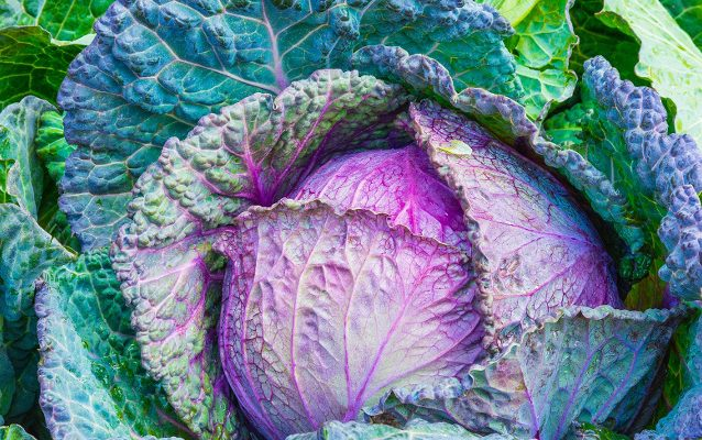 5 Advantages of a Raw Food Lifestyle