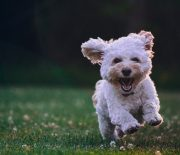 Could a Raw Dog Food Diet Be the Answer to Your Small Puppy's Health Problems?